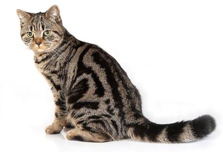 Как закапать уши коту?