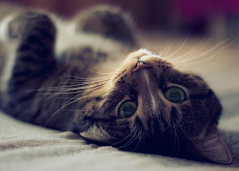 Коты не терпят панибратства