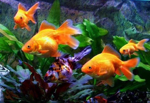 Долгосрочный уход за рыбками лучше доверить профессионалу
