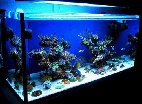 Что нужно для содержания рыбок в аквариуме?