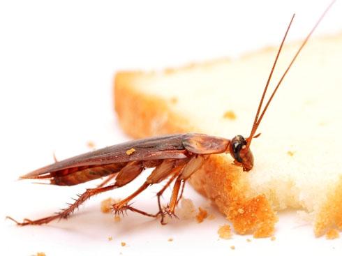 Лишите тараканов пищи и воды