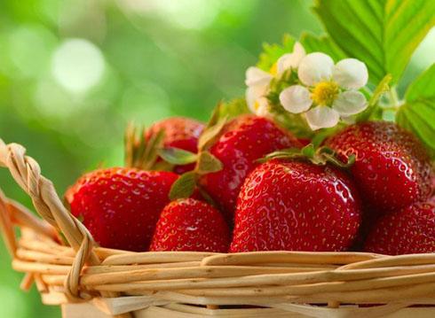 Чтобы ягоды были большими, клубнику нужно подкармливать азотным удобрением