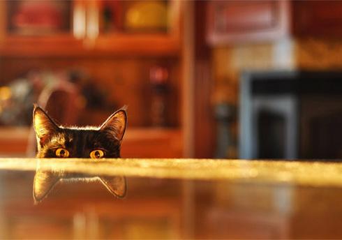 Как отучить котенка лазить по столу?