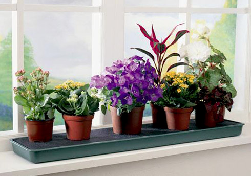 Как цветы влияют на атмосферу в доме?