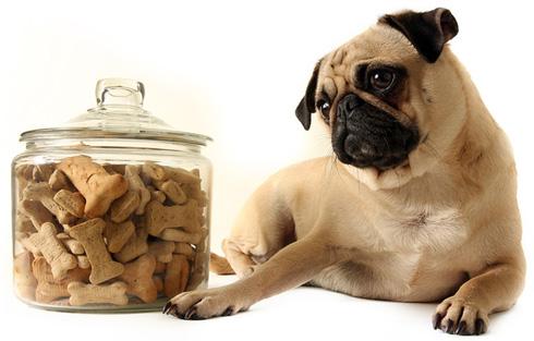 Как выбрать корм для собаки?