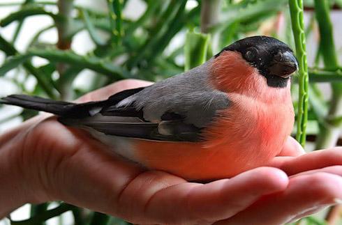 Какую птицу лучше завести в квартире?