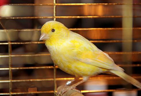 Какую птицу лучше завести?