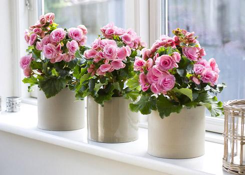 Какие цветы подходят для спальни?