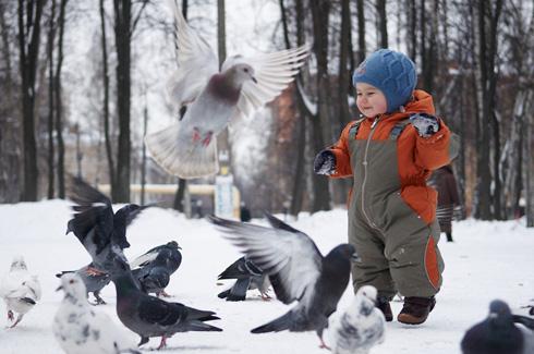 Где голуби прячут своих птенцов?