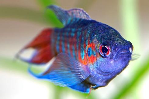 Запомните, какая именно рыба вам приснилась