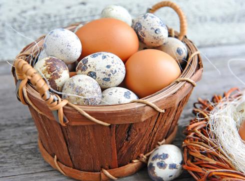 Возможно, что перепелиные яйца больше заинтересуют маленького гурмана