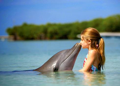 Речь дельфинов