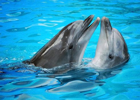 Дельфины занимаются сексом для удовольствия