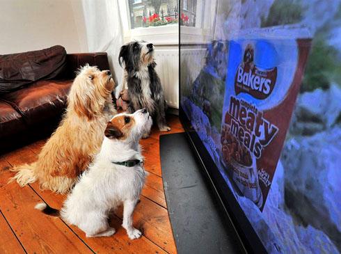 Собаки распознают изображения на фото
