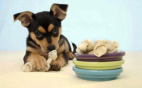 Как избавиться от зубного камня у собаки?