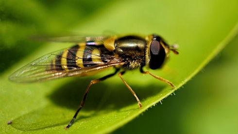 Что делать при укусе осы?