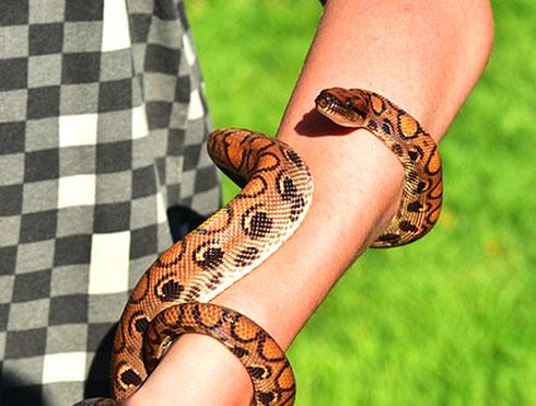 К чему приснилась змея мужчине, женщине?