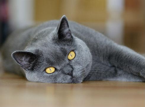 причины по которым у котов слезятся глаза