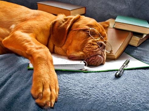 К чему снится спящая собака?