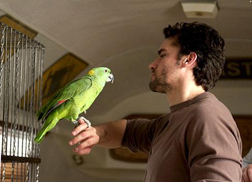 Какие попугаи умеют разговаривать?