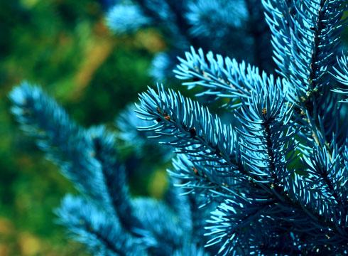 Почему снится елка?