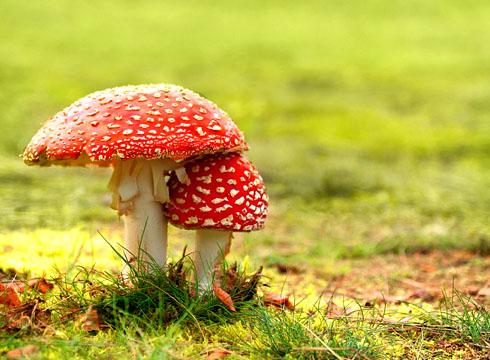 Какие грибы можно собирать?